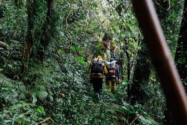 匯聚多元族群文化的樟之細路:踏訪台灣樟樹開採史